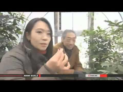 Japan Changes Renewable Energy Program; First Hydrogen Fueling Station i...