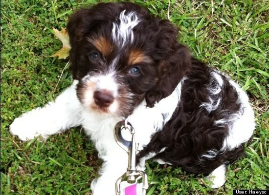 "In Huffington Post's ""Cutest Pets of 2011,"" the #1 pet belongs to one of our Pinterest followers, @Haley Harper! Who's your favorite?"