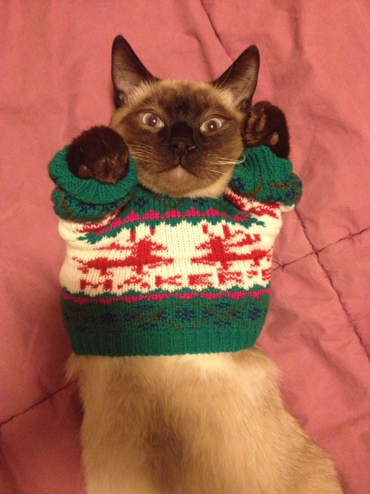 Best Santas Little Helpers Images On Pinterest Christmas - 22 adorable animals wearing miniature sweaters