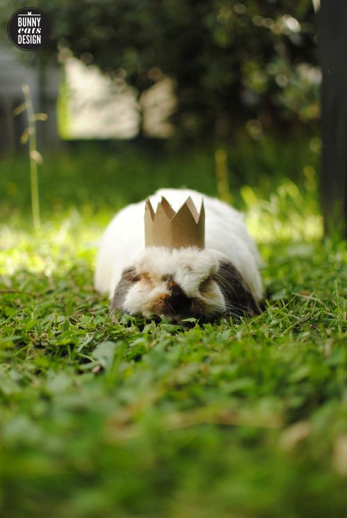 Tofu the rabbit. King for a day. Bunny Eats Design.