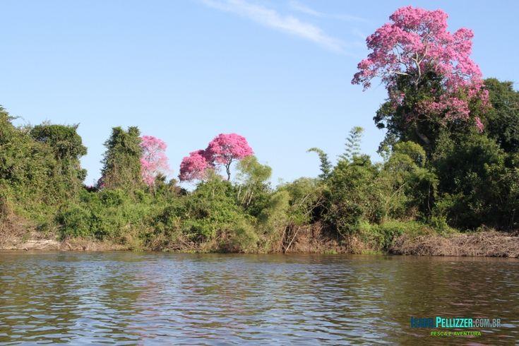 Pescaria realizada a bordo de um barco-hotel ganha outra dimensão, sempre pertinho da natureza e dos peixes num dos mais belos rios brasileiros, o Guaporé, no estado de Rondônia.