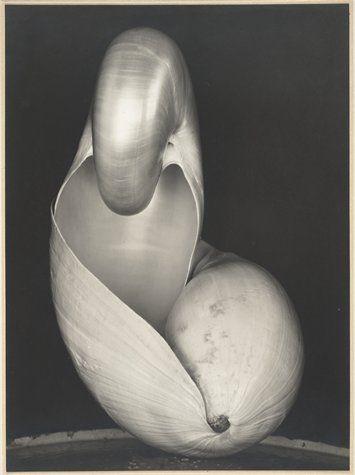Edward Weston Two Shells 1927 photograph   gelatin silver print