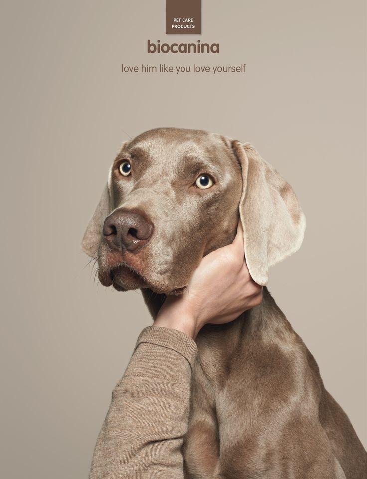 Biocanina: Pet, 5 | Ads of the World™