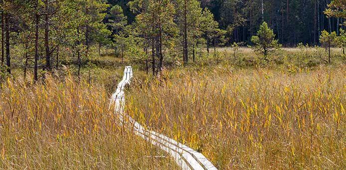 Isojoki, Lauhanvuori National Park - Nationalparks.fi