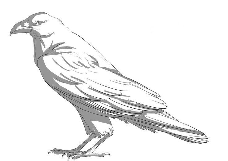 Plus de 25 idées uniques dans la catégorie Corbeau dessin