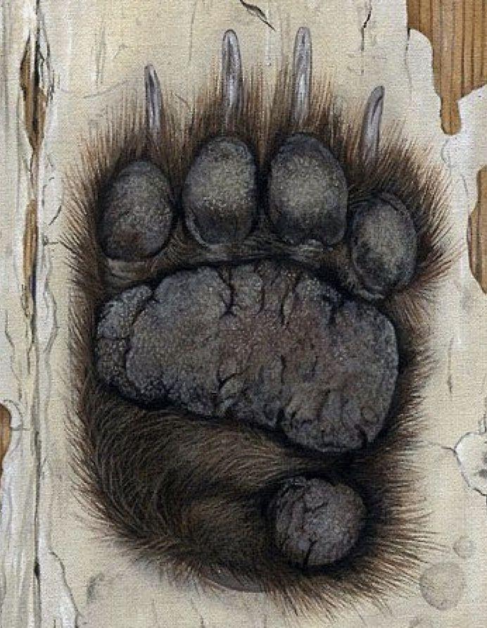 Медвежьи лапы картинки