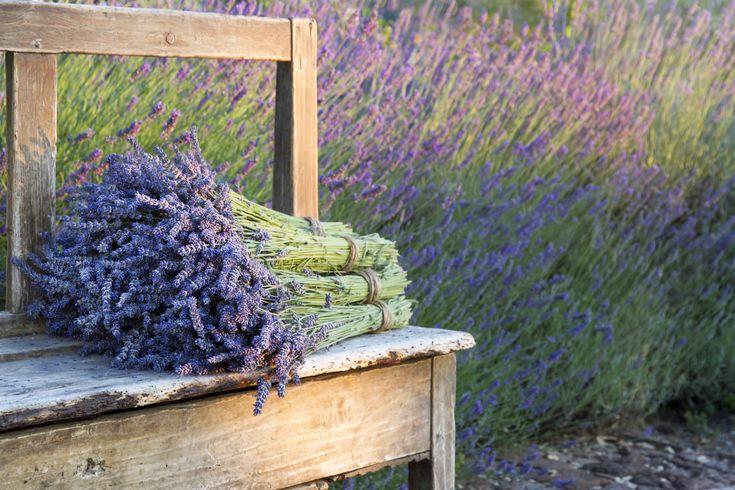 Sano+hyvästit+hyttysille+—+istuta+nämä+7+kasvia+ja+vieraasi+kiittävät+sinua