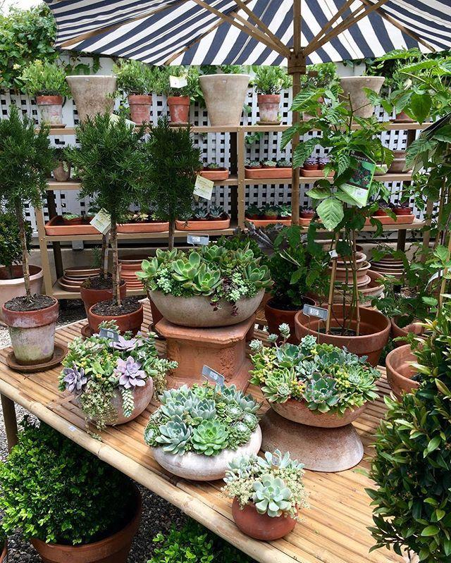 retail garden center ideas 343 best retail display ideas images on pinterest garden center