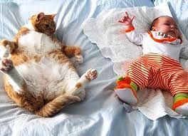 gatti spiritosi - Cerca con Google