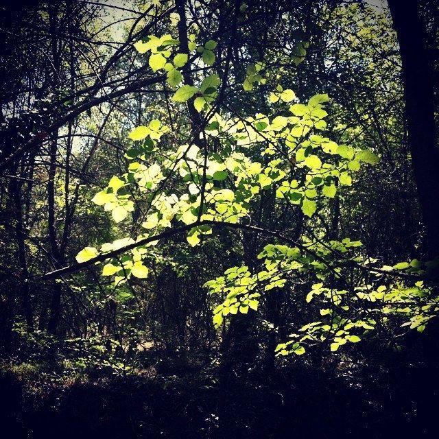 Filtros de luz #tree #leaf