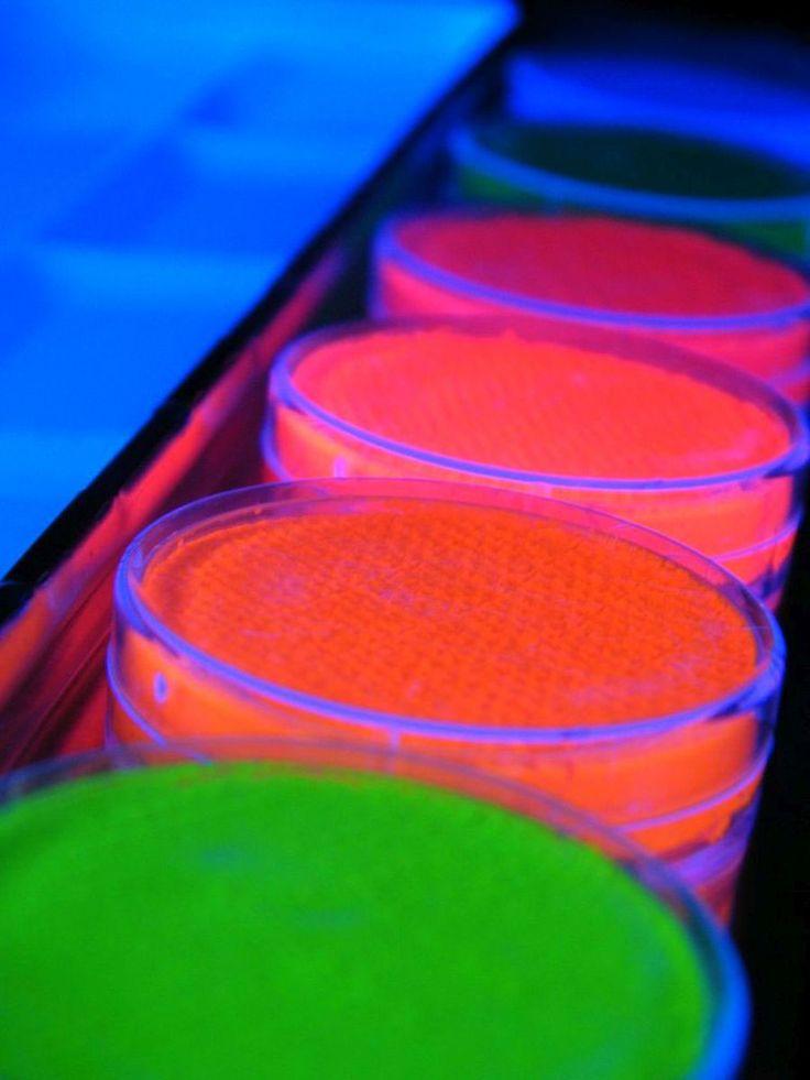 Neon Schwarzlicht Schminke 6er Palette + Pinsel  #blacklight #schwarzlicht #makeup #neon #party #color #fluo #psy #make #up