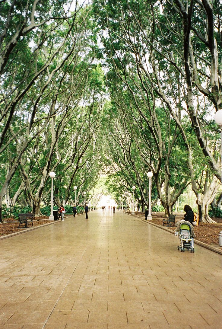 Hyde Park, Sydney Australia.