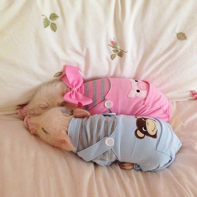 Snuggling with my favorite little monkey butt! Goodnight friends!#littlemonkey #sw... | Use Instagram online! Websta is the Best Instagram Web Viewer!