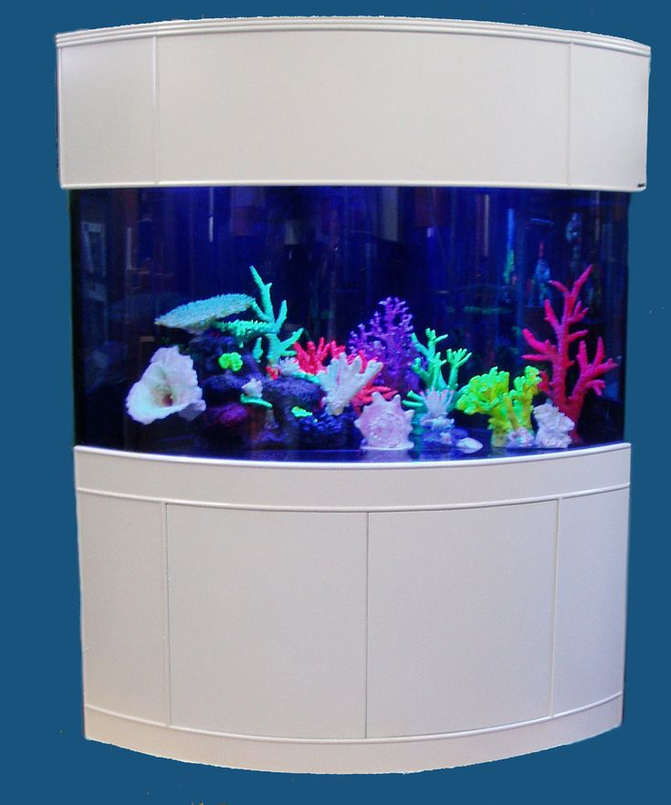 office fish tank. corner salt water fish tank for the between billu0027s office and conference room s