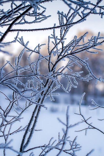 Winterjungle Photo: Nina L. Walthinsen