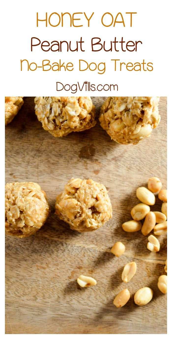 Honey Oat Peanut Butter Dog Treat Recipe No Oven Required