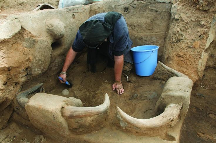 Çatalhöyük, particolare delle corna bovine inserite sulla piattaforma d'argilla della fig. 96 (foto Çatalhöyük Research Project)