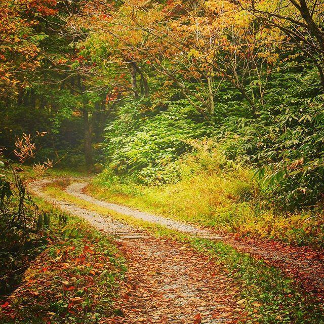 【mozumozu1030】さんのInstagramをピンしています。 《過去Picより 色付き始める小道 (また季節外れでごめんなさい… みなさんたくさんのいいね・コメントありがとうございます!! 今後もよろしくお願いします!! (2015/11 #大平峠 #飯田市 #長野 #日本 #Canon #kissx7i 撮影) #秋 #自然 #小道 #赤 #朱 #緑 #葉 #未舗装 #砂利道 #木 #森 #山 #アウトドア #キャンプ #一眼レフ #あぜ道 #絵画風 #Japan #road #leaf #outdoor #camera #forest #mountain》
