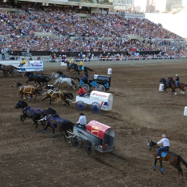 Chuckwagon races at the Calgary Stampede - Calgary Canada