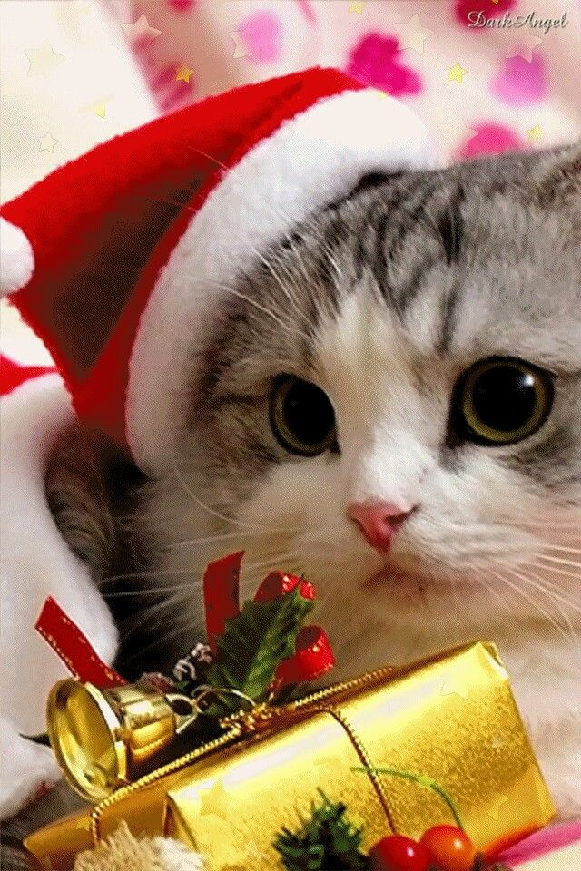 Little kitty cat has a little Christmas gift for you.