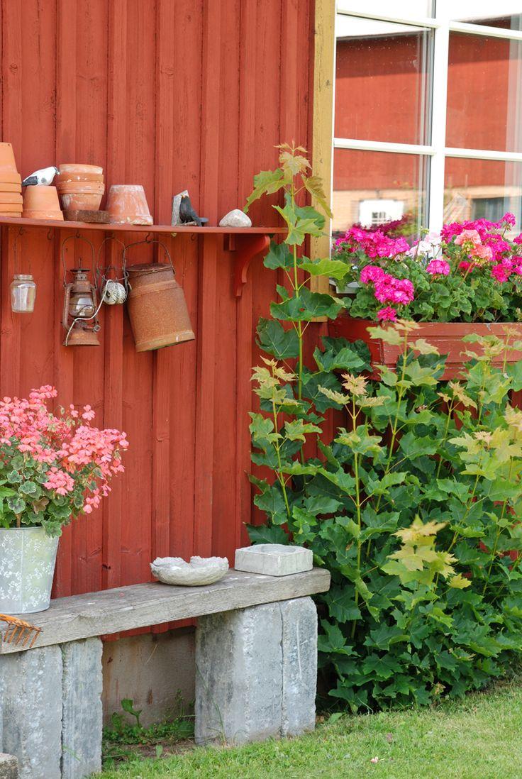 Vita Ranunkler: På besök i Småland