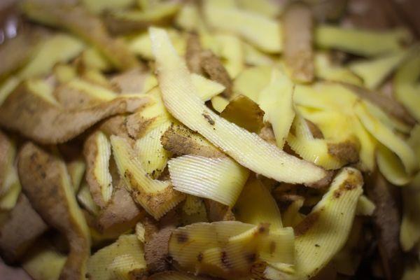 Хотите много смородины? Насушите картофельных очисток.