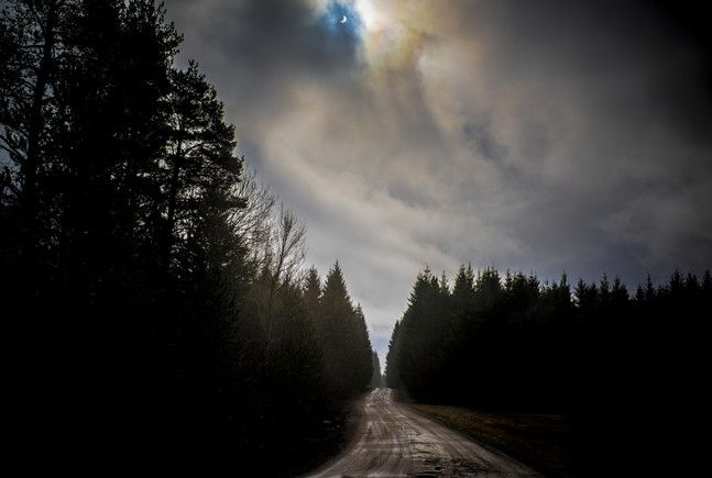 Skogsvei i Solformørkelse