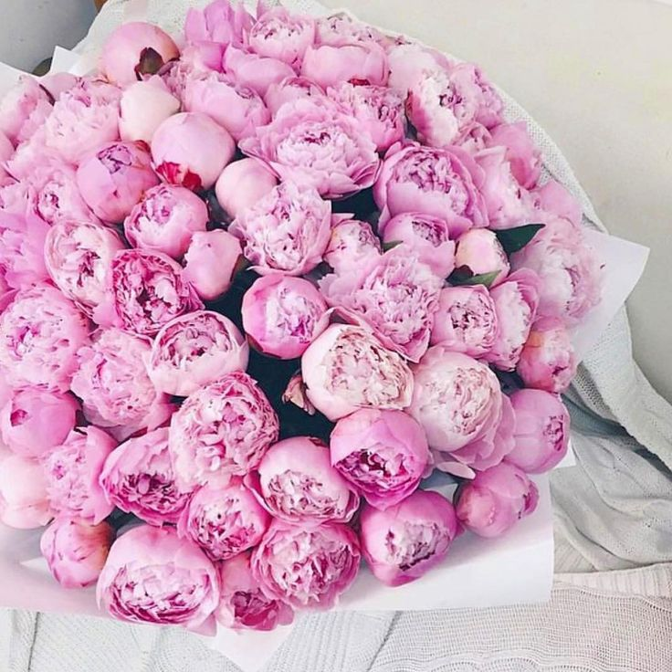 Nothing Sweeter Than Pink Peonies On A Sunday Pic From