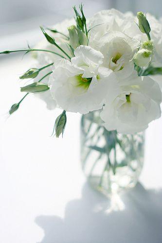 WHITE LISIANTHUS LOVE THIS IN BOUQUETS/   Deland Florida wedding flowers/ Volusiacountyweddingflowers/ www.callaraesfloralevents.com