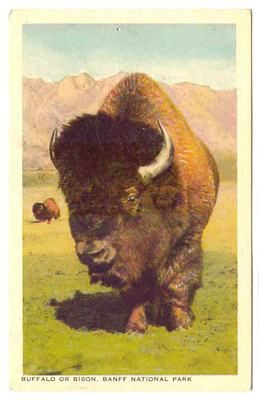 Whole website of very cool historic Bison photographs and epherma!