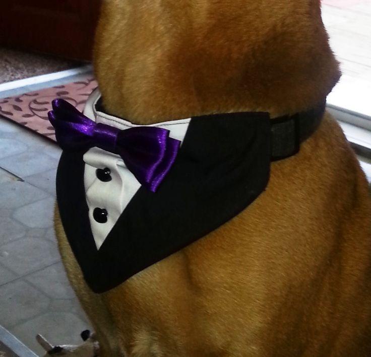 Tuxedo Collar Bandana Black With Purple Bow Tie Dog