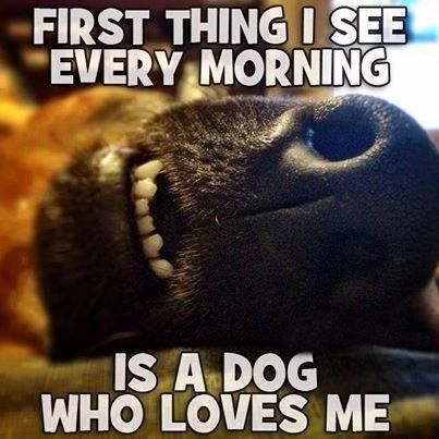 First thing I see every morning is a dog who loves me... .