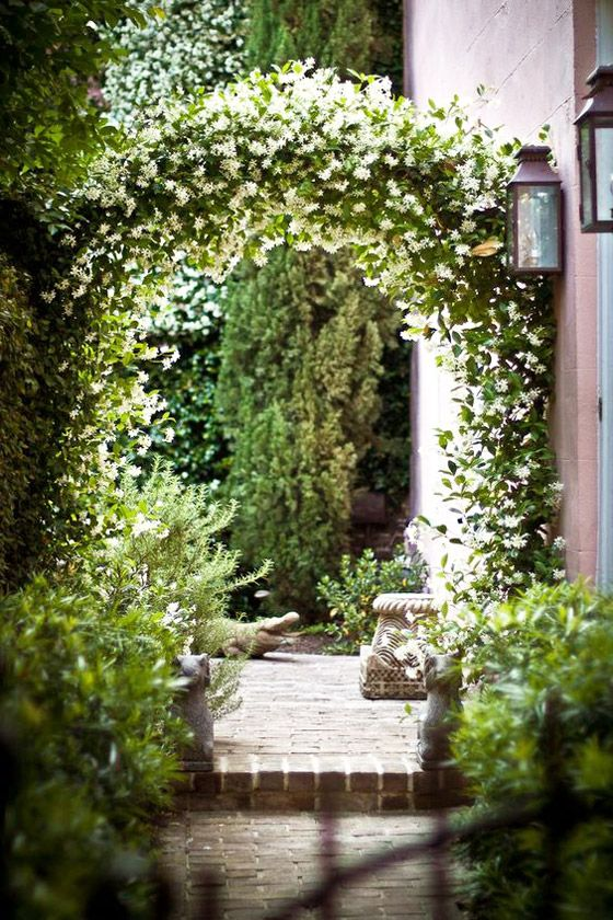 star jasmine: easy-to-grow vine with a thick covering of white flowers and strong scent. grows up to 20 feet in lengthy to quickly cover trellice or fence. can also be planted in container with small trellis for moving indoors in winter. zones 8-11 in partial to full sun with moderate watering needs.