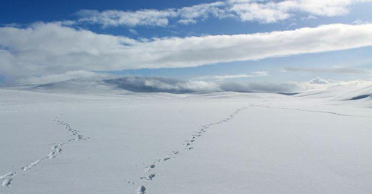 Focus.de - Hundeschlitten, Eisfischen, Snowmobile: Zauberhaftes Västerbotten: Hier wartet das beste Schnee-Erlebnis Ihres Lebens - Video - Video