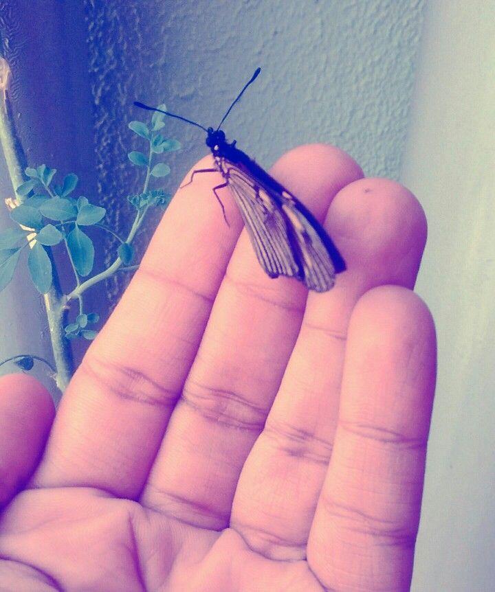 Encantadora de borboletas 😁