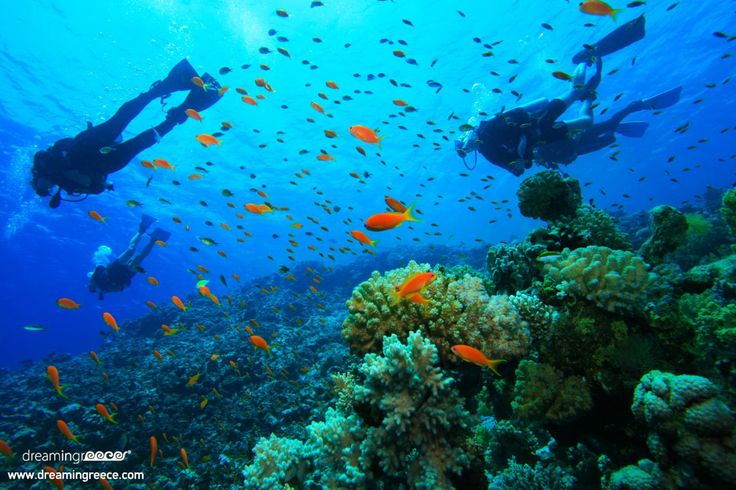 Colorful corals, sea anemones, sponges, shellfish, rare species of fish, sunken cities and forgotten shipwrecks are waiting to take you to a magical world! http://www.dreamingreece.com/activities/scuba-diving-in-greece -  #scubadiving #greece #dreamingreece #dive #wateractivities #watersports #holidays #vacations
