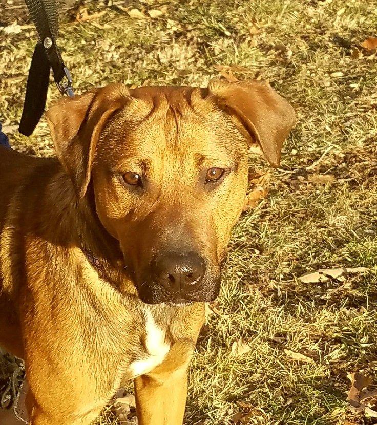 Please Adopt This Amazing Puppy Contact Me Thru Pintrist Mr