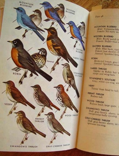 birds of the world books