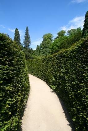 best 25 shrubs for privacy ideas on pinterest evergreen hedging plants backyard landscaping. Black Bedroom Furniture Sets. Home Design Ideas