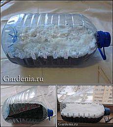 Выращивание сеянцев цветов в пластиковой бутылке   Умелые ручки