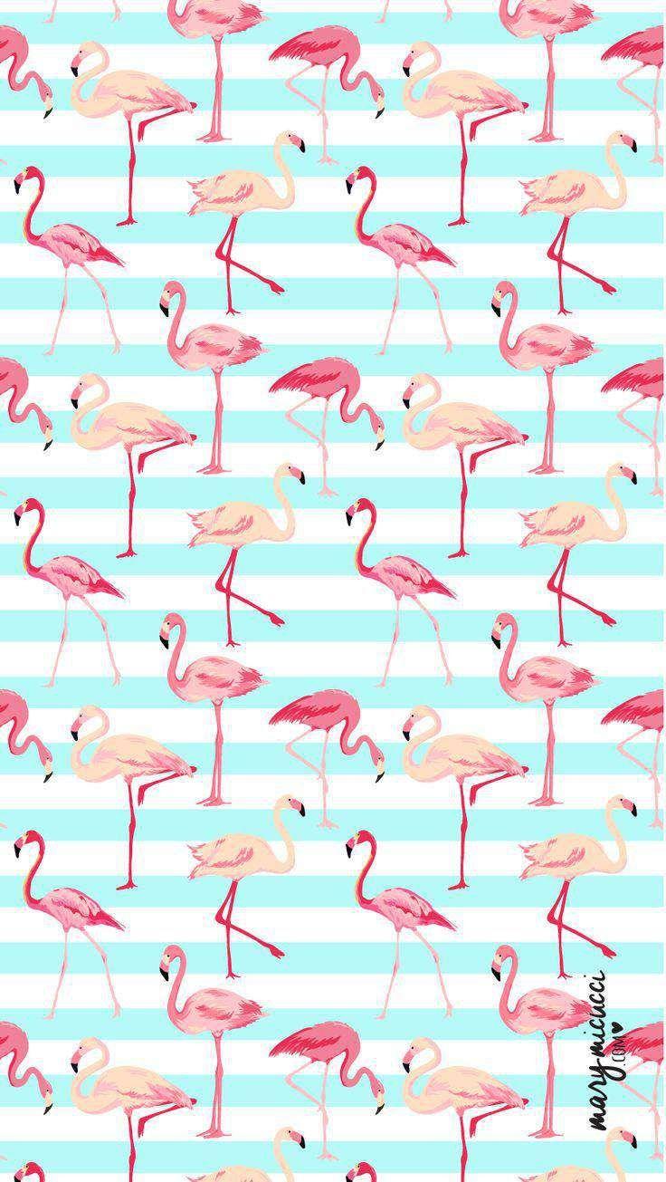 нескольких картинки фламинго для распечатки черно белые фон рамка весенней природой