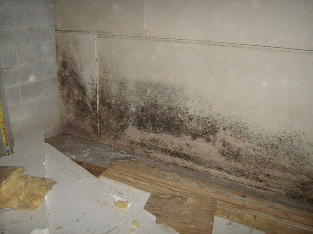 How To Kill Bathroom Mold how to test for black mold - creditrestore