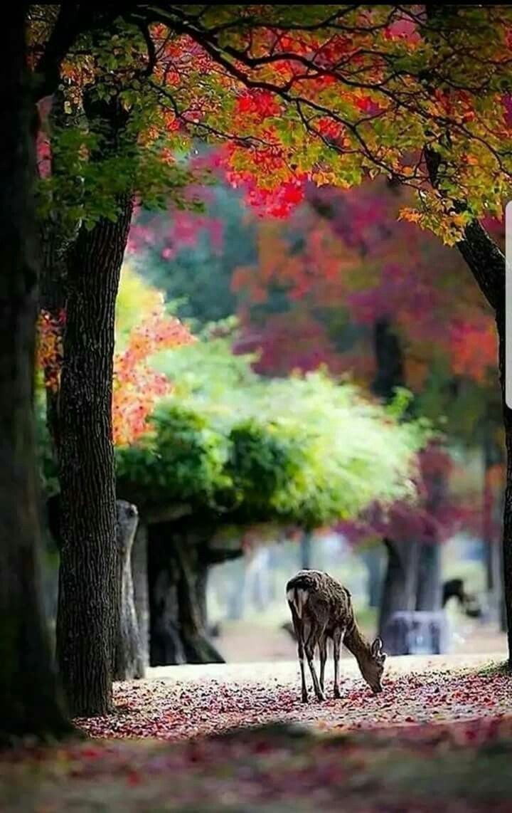 Pin By Arsh Khan On Diversos Animais Nature Photography Nature Pictures Nature
