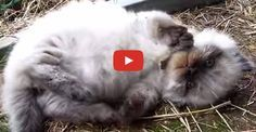 Fluffy Kitten is About to Melt Your Heart