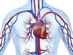 Tento prírodný nápoj vám prečistí žily až k srdcu | Domáca Medicína