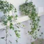 Natural Air-purifying plants! Needs this for the pets and allergies