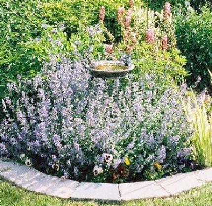 Beautiful Birdbath Surrounded By Mint Plants