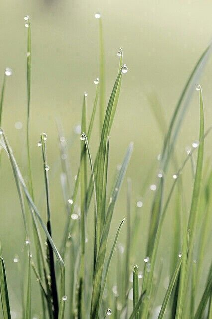 """Grasses After the Rain """"The moment one gives close attention to any thing, even a blade of grass, it becomes a mysterious, awesome, indescribably magnificent world in itself."""" - Henry Miller"""