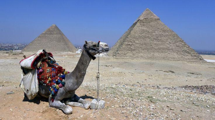 》 Pyramiden von Gizeh + 🐪.《