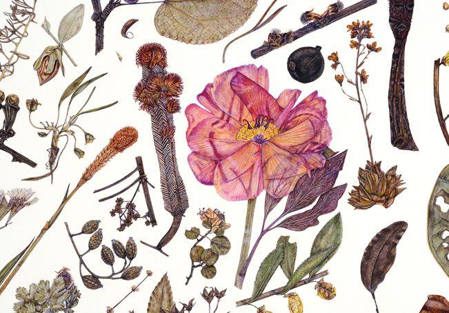 Herbarium Specimen Painting